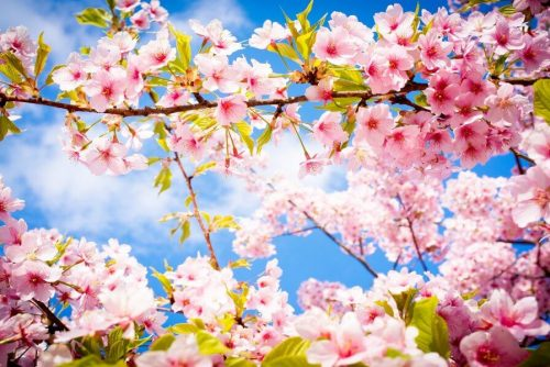 Spring tree | Luckybansko