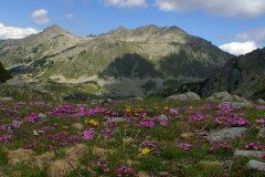 Parcurile din Muntele Pirin