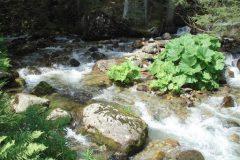 Râul Bistritsa din Munții Pirin