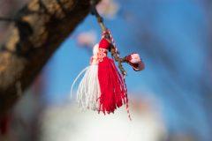 Martenica frumoasă pe un copac | Lucky Bansko
